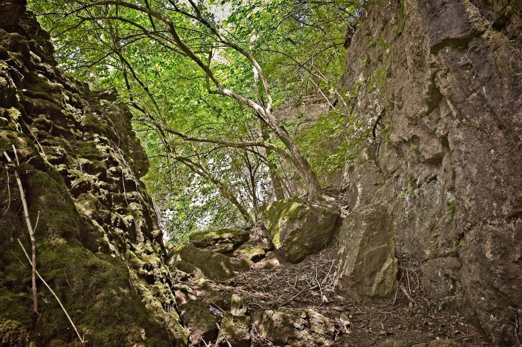 caves, path, ferncliff