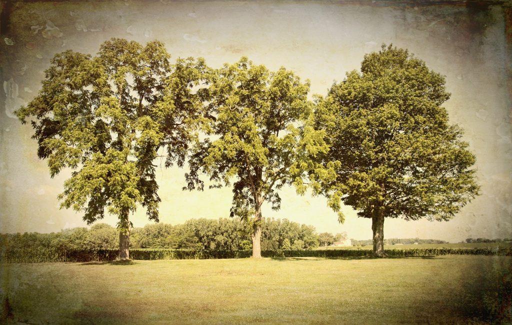 scenery, trees, artistic