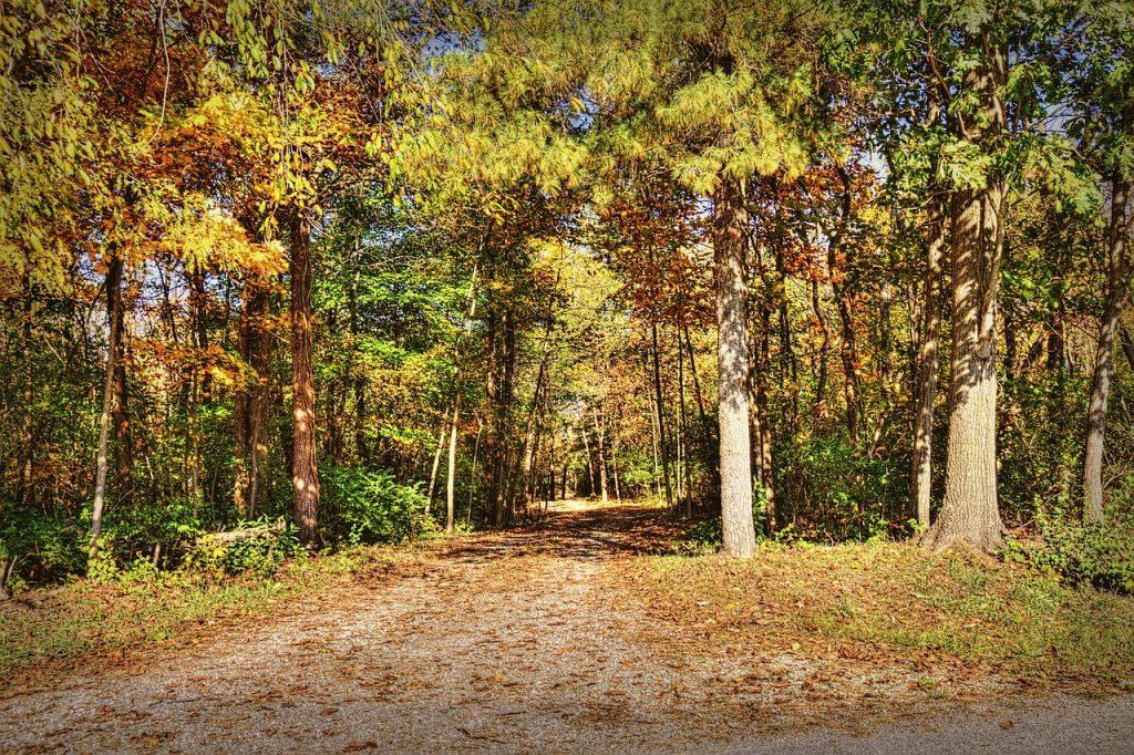 scenery, autumn, trees
